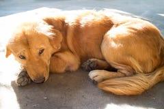 哀伤的狗睡觉在街道上和 免版税库存照片
