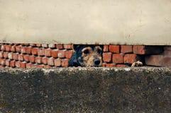 哀伤的狗 库存图片