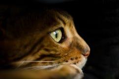 哀伤的猫看得外面 免版税库存照片