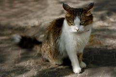 哀伤的猫 库存图片