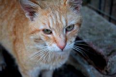 哀伤的猫 免版税图库摄影