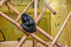 哀伤的笼中的猴子 免版税库存图片