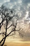 哀伤的结构树 免版税库存图片