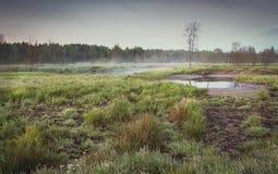 哀伤的自然的一个忧郁的风景在灰色和暗色的一个有薄雾的早晨 库存照片