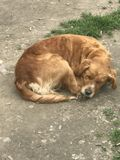 哀伤的街道狗 免版税库存图片