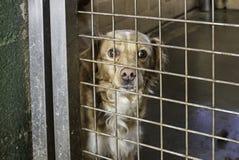 哀伤的被放弃的狗 图库摄影