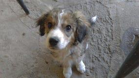 哀伤的逗人喜爱的小狗 免版税库存照片