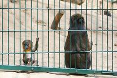 哀伤的逗人喜爱的小猴子 免版税图库摄影