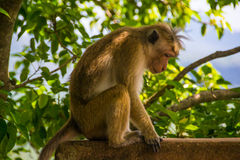 哀伤的猴子坐室外 库存照片