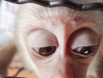 哀伤的猴子 免版税图库摄影
