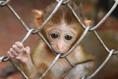 哀伤的猴子2 免版税图库摄影