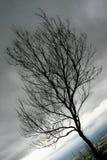 哀痛死的树 免版税图库摄影