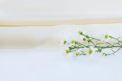 织品丝绸缎和切削刀花 免版税图库摄影