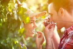 品尝葡萄的酿酒商特写镜头在葡萄园里 库存照片