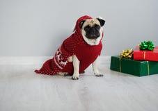 品种哈巴狗可笑的小狗在驯鹿衣服的一个假日之前穿戴 免版税库存图片