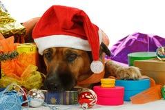 品种圣诞节混合的狗作梦 免版税库存照片