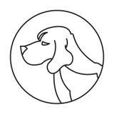 品种狗小猎犬头  免版税图库摄影
