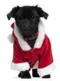 品种狗混杂成套装备圣诞老人佩带 库存照片