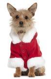 品种狗混杂成套装备圣诞老人佩带 免版税库存图片