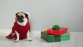 品种的狗在驯鹿衣服的拖把 穿一件红白的毛线衣的狗,坐在礼物旁边 快活的圣诞节