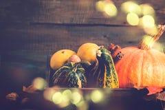 品种装饰南瓜 秋天、感恩或者万圣夜概念,拷贝空间 免版税库存照片