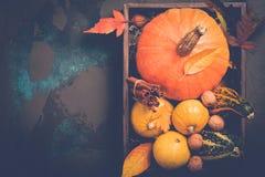 品种装饰南瓜 秋天、感恩或者万圣夜概念,拷贝空间 库存图片