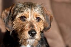 品种逗人喜爱的混杂的小狗 库存图片