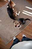 品种逗人喜爱的混杂的小狗 免版税库存照片
