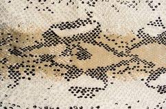 织品纹理镶边蛇皮革 库存图片