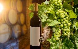 品酒在有木葡萄酒桶的老葡萄酒库里在酿酒厂、红葡萄酒瓶和葡萄树 库存照片