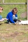 哄骗哺养的兔子 库存图片