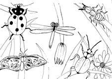 哄骗样式墨水图画草甸对象,植物,花,草,昆虫,手拉的例证 免版税库存照片