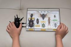 哄骗检查一只假的甲虫反对一个箱子昆虫标本汇集 免版税库存图片
