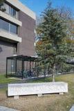 哈佛法律学院大学历史建筑在剑桥, Ma 免版税库存照片