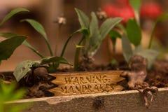 从哈利・波特的Mandrake植物 免版税图库摄影