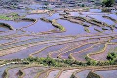 哈妮种族人民的露台的米领域在原阳,云南,中国 免版税库存照片