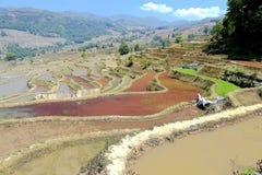 哈妮种族人民的露台的米领域在原阳,云南,中国 免版税图库摄影