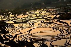 哈妮种族人民的露台的米领域在原阳,云南,中国 免版税库存图片