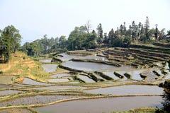 哈妮种族人民的露台的米领域在原阳,云南,中国 库存照片