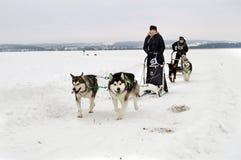 哈尔科夫- 1月 14 :拉雪橇狗赛跑 在s dogsled的运动员奔跑 免版税库存照片