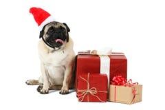 哈巴狗品种的一条滑稽的狗,穿戴在圣诞老人帽子坐边在礼物盒附近 背景查出的白色 库存照片