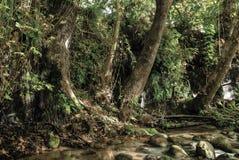 哈斯巴尼河snir河和保留在北部以色列 免版税库存图片