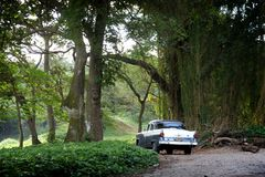 哈瓦那古巴自然 库存图片
