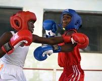 哈瓦那拳击队 免版税库存照片