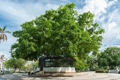 哈瓦那,古巴- 2017年10月22日:与公园和木棉,美国人Fraternity树的哈瓦那都市风景  免版税库存图片