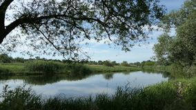 哈维尔河风景在德国的布兰登堡区的哈维尔兰县 ?? 柳树和草甸 股票录像