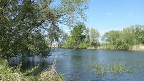 哈维尔河风景春天 在岸的柳树 哈维尔兰县地区在德国 影视素材