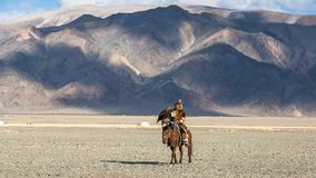 哈萨克人在传统衣物的老鹰猎人,在马背上,当寻找对拿着一只鹫时的野兔 库存照片