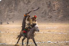 哈萨克人在传统衣物的鹫猎人,有在他的胳膊的一只鹫的在与鸟的每年全国竞争时 库存图片