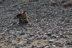 哈萨克人老鹰猎人传统衣物,当寻找对拿着一只鹫时的野兔 免版税库存图片